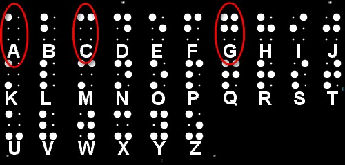 De letters A, C en G in Braille