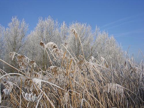 feëriek winterlandschap