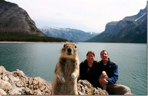 Eekhoorn, zomer 2009, Canada