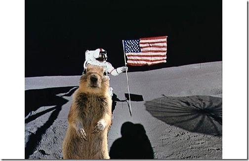Eekhoorn bij eerste maanlanding