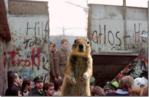 Eekhoorn bij val Berlijnse muur